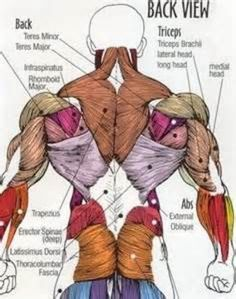 Lower Back Anatomy Pictures . Lower Back Anatomy Pictures Human Body Muscle Anatomy Lower Back View Muscle Pain Skeleton Lower Human Body Muscles, Human Body Art, Human Human, Muscles In The Body, Noms Des Muscles, Lower Back Anatomy, Muscle Names, Human Muscle Anatomy, Muscle Chart Anatomy