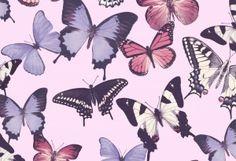 Tapetit   Suomen AM-Markkinointi Oy Rooster, Plants, Animals, Dutch, Walls, Exotic, Animaux, Dutch Language, Animales