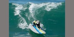 A dog catches a wave during the Surf City Surf Dog contest in Huntington Beach. (© Reuters/Lucy Nicholson)
