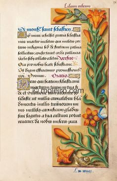 Orange lily, f. 176r, Great Hours of Anne of Brittany (reproduction from M. Moleiro)