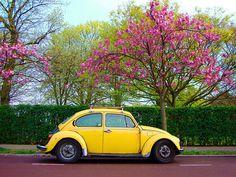 Yellow Beetle :) YELLOW ONE!!!!!!