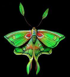 More moths.