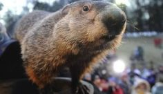 When is Groundhog Day 2015? Punxatuwney Phil May Be Snowed In - Cross Your Fingers For An Early Spring!