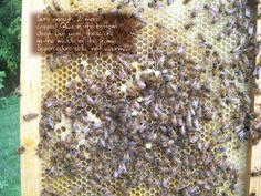 Very Useful Bee Blog...boy did I learn alot!