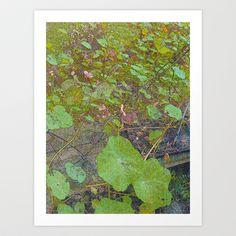 Nasturtiums in March Art Print by Kathleen Weil - $14.56