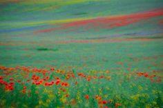 Foto Sandra Bartocha, ein Foto wie ein Gemälde von Monet