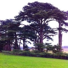 Attingham Park Park, Plants, Parks, Plant, Planting, Planets