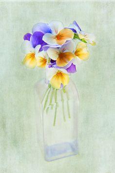 Delicate Viola Flower Print Purple Aqua Peach by ChasedByBeauty