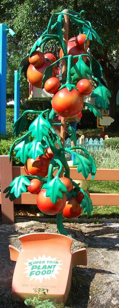 Mickey Mouse tomatoes in Mickey's Toontown Fair in the Magic Kingdom at Disney World. This area was demolished to make room for the Fantasyland expansion. #HiddenMickey