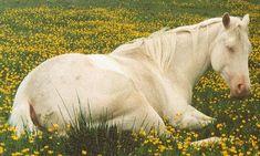 American Quarter Horse cremello mare Kitty in flowers - Tiere - Quarter Horses, American Quarter Horse, Most Beautiful Horses, All The Pretty Horses, Animals Beautiful, Andalusian Horse, Friesian Horse, Arabian Horses, Horse Photos