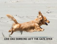 $4.59 - Metal Refrigerator Magnet Long Haired Dachshund Dog Live Left Like Gate Open #ebay #Home & Garden Dachshund Breed, Long Haired Dachshund, Funny Dachshund, Daschund, Dachshund Quotes, Dog Quotes, Funny Quotes, Rare Dogs, Rare Dog Breeds