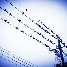 電線 Transmission Line, Electrical Wiring, Wire, Beauty, Beauty Illustration, Cable