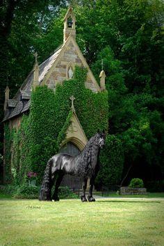 Frederik the great anses vara världens vackraste häst. …