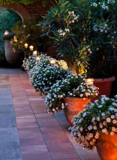Lights in potted plants outside, nice!/  how pretty to line your walkway---I would use just a few solar lights along the way mainly for accent