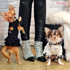WOOFLINK - Hip designer dog clothes: HAPPY WEDNESDAY ♥