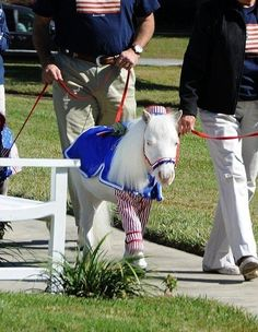 They're pretty patriotic. | 19 Reasons Why Therapy Mini Horses Are The Most Amazing Creatures Of All Time