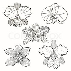 Illustration of Orchids Five species of flowers hand drawn Vector illustration vector art, clipart and stock vectors. Orchid Drawing, Floral Drawing, Flower Drawing Tutorials, Flower Sketches, Botanical Drawings, Botanical Illustration, Orchid Tattoo, Orchids, Orchid Flowers