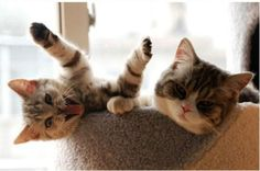 Hey bro, gimme a high five!