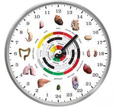 A kínai biológiai óra nem téved – Fedezd fel, mely szerved nem működik jól a testedben | Diabetika.hu