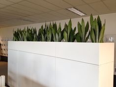 Office Plant Hire | Indoor Plant Hire Melbourne | Luwasa - Indoor Plants Melbourne