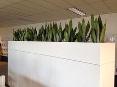 Office Plant Hire | Indoor Plant Hire Melbourne | Luwasa - Indoor Plants Melbourne