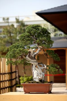 The Omiya Bonsai Art Museum #1 | Flickr - Photo Sharing!