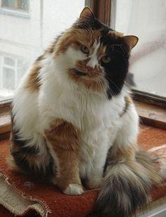 cat pose  cool cats  cats cool cats cat pose