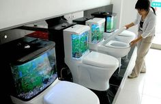 strange aquarium using a model of toilet. better do not place the aquarium is in the family room or living room. Then the guests who visit you would not think if the room was the toilet.