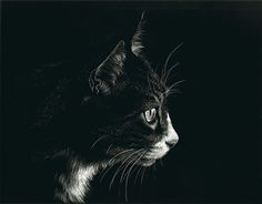 """Cold Stare by Heather A. Mitchell Scratchboard ~ 11"""" x 14"""""""