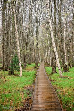 Jesup Path Acadia National Park | by Susan Garver Photography
