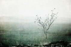 A single tree overlooking the Oslofjord from Slettefjell, Horten. Textures added in Photoshop.    Signed and numbered print (Fuji photo paper) from limited edition of 100. The photo is unframed. Signed and numbered on the back.     FREE WORLDWIDE SHIPPING!    Size: 20x30 cm (7.9x11.8 inches)    #wallart #art #homedecor #poster #gracefulfoto #decor #photography #fineart #interiordesign #beautiful #relaxing #waitingroomart | Shop this product here: http://spreesy.com/GracefulFoto/50…