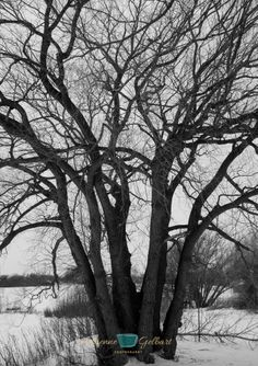 Tree Family Abstract Artwork, Abstract, Artwork, Photography