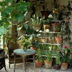 Terracotta pots are lined up on an etagere and a old wicker chair and matching table furnish a corner of the conservatory/Robert Kime