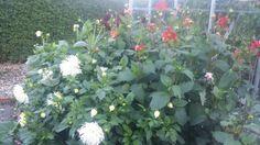 Efterårets  blomster