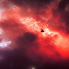 Papers.co wallpapers - mu09-bird-fly-sky-clouds-red-sunset-fire-nature-animal - http://papers.co/mu09-bird-fly-sky-clouds-red-sunset-fire-nature-animal/ - animal, sky