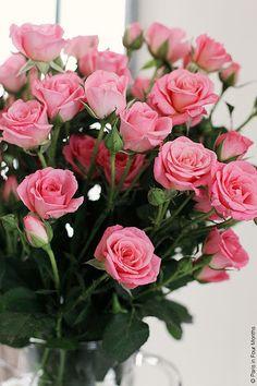 Pink Roses | por Paris in Four Months