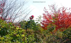 First colours of Autumn One Color, Botanical Gardens, Poland, Colours, Autumn, Pictures, Painting, Photos, Fall