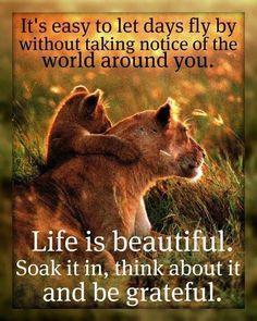 Life is Beautiful Inspirational
