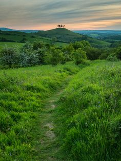 wanderthewood: Colmer's Hill, Dorset, England by Damian_Ward on Flickr