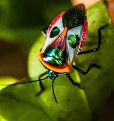 Hemiptera /hɛˈmɪptərə/ is an order of insects most often known as the true bugs…