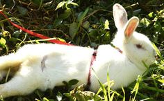 Ronnie the Runaway Rabbit Escapes Factory Farm Hell read his story: http://www.care2.com/causes/ronnie-the-runaway-rabbit-escapes-factory-farm-hell.html