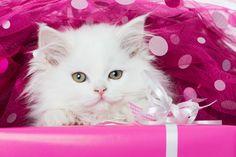 Download Wallpaper ID 2136836 - Desktop Nexus Animals