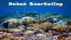 Snorkeling video from Dahab Egypt. Discover the vibrant coral reefs of the Blue Hole and Ras Abu Galum National Park. Scuba Diving Thailand, Best Scuba Diving, Padi Diving, Underwater Video, Underwater Photos, Underwater World, Travel Tours, Asia Travel, Egypt Culture