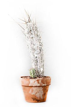 CFDA Swarovski Nominees Create Objets D'Art to Benefit Free Arts NYC - Suno encrusted a live cactus with over 600 crystals.