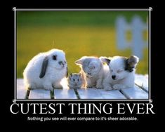 the cutest things ever - Google Search