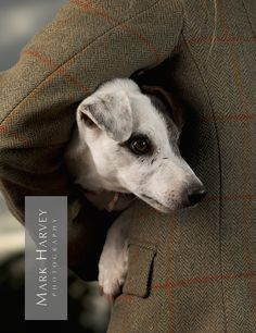 Terrier and Tweed by Mark Harvey  Countryside Clothing, Animal Photography, Pets, Editorial, Uk Horse Photographer, Refined Equine Portraiture.