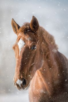 Beautiful Horse Pictures, Most Beautiful Horses, Free Pictures, Free Images, Animal Pictures, Horses In Snow, Dame Nature, Farm Photography, Landscape Photography