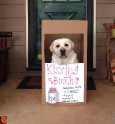 They're very successful entrepreneurs. | 27 Reasons Labradors Are The Best Creatures In The Galaxy