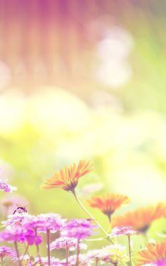 #phone #background flores coloridas