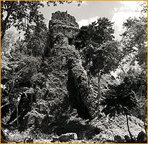 Tikal before they cleared all the brush off in 1957.
